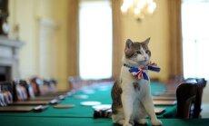 Министры уходят, коты остаются: Ларри не покинет Даунинг-стрит