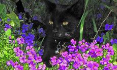 Mincīt, škic! Septiņi veidi, kā glābt dārzu no svešiem kaķiem