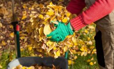 Auces novadā degušas sausās lapas