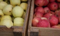 На Центральном рынке – первые яблоки нового урожая