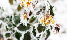 Синоптики: температура воздуха опустилась ниже нуля