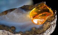 Никто не хочет добывать янтарь в Куршском заливе в Литве