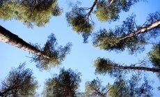 Atbalsta skaņu vaļņa pagarināšanu Mežaparka apkaimē; ieceri virza apstiprināšanai Rīgas domē