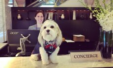 Mīlulis uz pasūtījumu – viesnīcā Sanfrancisko iespējams 'izīrēt' suni