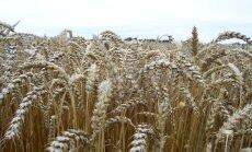 Krasi sarūkot ieņēmumiem, lauksaimnieki valdībai prasīs papildu 30 miljonus eiro
