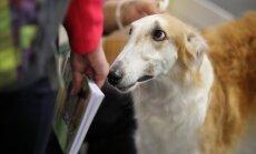 ФОТО: Выставка породистых и необычных собак и кошек на Кипсале