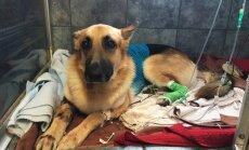 Suns ASV no klaburčūskas aizstāv septiņus gadus vecu meiteni