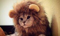 Populārākie 'Instagram' kaķi no Latvijas – Sansa un R2D2