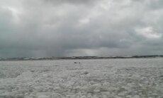 ВИДЕО ОЧЕВИДЦА: В Вентспилсе на пляж выползли тюлени