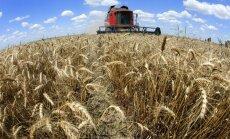 Pasaules kviešu eksporta līdera pozīcijā ASV nomainīs Krievija
