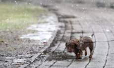 Nākamnedēļ valdīs vējaini laika apstākļi, kārtīgas ziemas iestāšanos neparedz