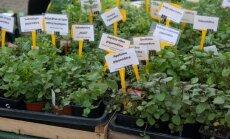 Foto: Viss iedomājamais dārzam Ķīpsalas izstādē 'Nature Expo'