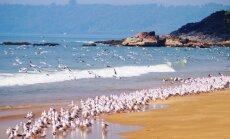 В Индии появится 17 первоклассных курортов на берегу океана