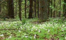 Pārgājienā aicina iepazīt Krustkalnu dabas rezervātu