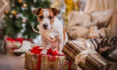 Kaķa un suņa bīstamie Ziemassvētki