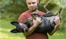 Гуляете с собакой без поводка? За инциденты - уголовная ответственность