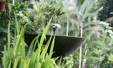 10 dažādas strūklakas, kas lieliski iederēsies dārzā