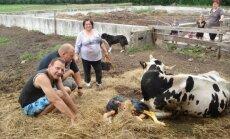 Foto: Jestrākie 'Lauku sētas' dalībnieki atgriežas saimniecībā