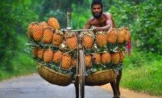 Dienas ceļojumu foto: Kā ananasi Bangladešā 'dodas' uz tirgu