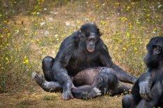 Kāda būtu cilvēku seksuālā dzīve, ja viņi būtu dzīvnieki