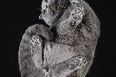 ПОДкоты? КотоНИЗЫ? Литовский фотограф нашел необычный ракурс для съемки котиков