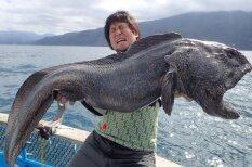 Netālu no Fukušimas noķerta atbaidoša paskata milzu zivs
