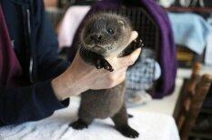"""20 детенышей животных, от """"мимимишности"""" которых перехватывает дыхание"""