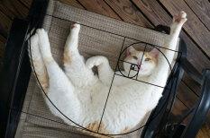 """Коты математически идеальны: доказательство на примере """"чисел Фибоначчи"""""""