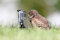 Фотоживотные: как звери используют съемочную технику в своих звериных целях
