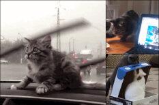 """Просто 16 """"гифок"""" с котиками, которые попали в нелепые и смешные ситуации"""