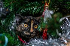 У них лапки! ФОТО 12 котов, которые думают, что они елочные украшения