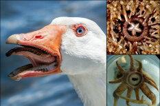 """17 жутких фото """"ротиков"""" существ, которых все считают безобидными"""