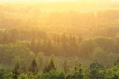 'Latvijas valsts mežu' teritorijā iestādīti 26 miljoni jaunu koku