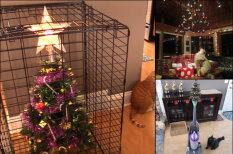 15 гениальных способов защитить новогоднюю елочку от котов и собак