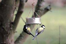 Kas jāzina par putnu barošanu