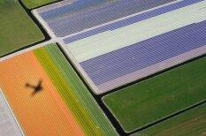 Kā pasaulē lielākais puķu dārzs izskatās no putna lidojuma