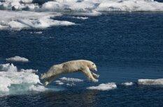 Dzīvnieku sporta disciplīnas - sinhronā peldēšana ar nīlzirgiem
