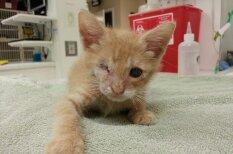 Невероятная история про кота, который потерял оба глаза, но обрел душевное равновесие