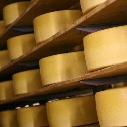 Čedaras siers