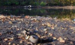 Foto: Skaistais Kīleveina grāvis pārvērties pusžuvušā zaņķī