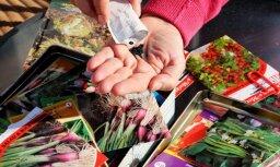Псковские таможенники конфисковали у гражданина Латвии 3,5 кг семян