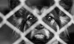 Москва: в приюте для собак нашли десятки тел животных, у здания произошли столкновения