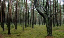 'Latvijas valsts meži' vērtē iespējas no zviedriem iegādāties plašo meža īpašumu