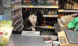 Foto: Veikalā Mellužos pircējus apkalpo kaķis