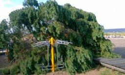ФОТО, ВИДЕО: Вырванные с корнем сосны и покореженные машины - Саулкрасты приходят в себя после бури