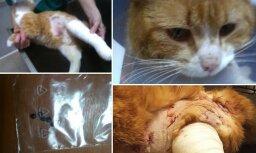 ФОТО: Неизвестные выстрелили в кота из охотничьего ружья