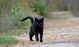 Названы причины, по которым кошка двигает хвостом