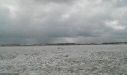 Video: Ventspils pludmalē starp ledus gabaliem aušojas roņi
