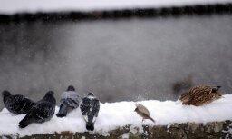 Sestdien dažviet gaidāms slapjš sniegs