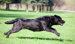Ученые: первые американские собаки— это потомки собак из Сибири